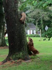 Rufus Dragon versus the Groundhog