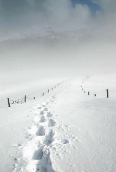 Snow and fog.