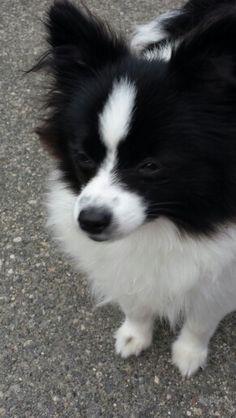 Timo, my precious granddog