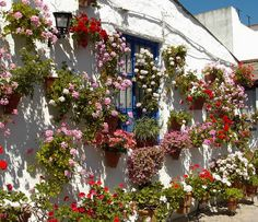 Festival Patios Cordobeses Marroquies6 by Ildelop by www.jardinerosenaccion.es, via Flickr