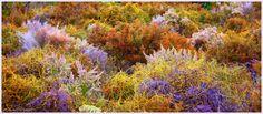 Autumn Fynbos -Western Cape