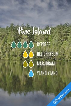 Pine island - cypress, helichrysum, marjoram and ylang ylang