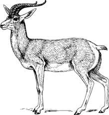 goat drawing - Google Search