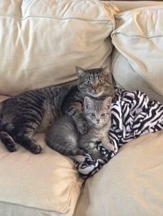 Kitty hug