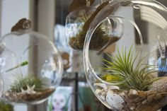 Obsessed with these awesome hanging terrariums we found at Bungalow Love in Berlin!