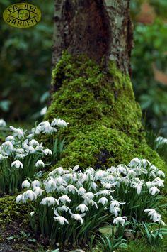 My Garden Journal: Nothing. My Garden Journal: Nothing. Landscape Maintenance, Garden Journal, Woodland Garden, Woodland Flowers, White Gardens, Spring Is Here, My Secret Garden, Plantation, Shade Garden