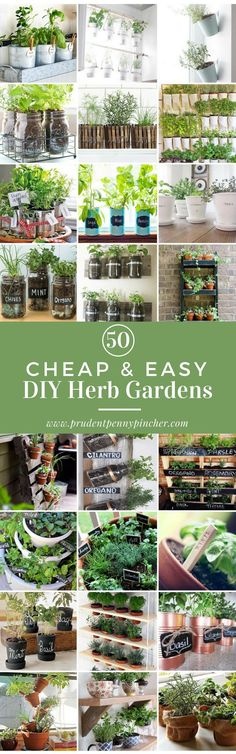 50 Cheap and Easy DIY Herb Garden Ideas #DIYflowerBedGardenIdeas #GardenIdeas #diygardeningideas Do you have any tips to share?