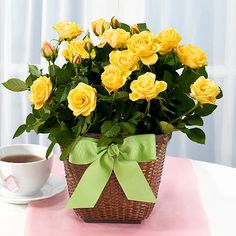 Potted Yellow Rose in Basket and other flowers & plants at ProFlowers.com
