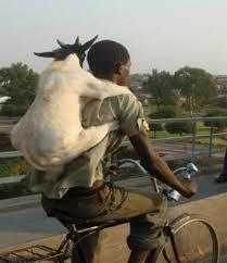 Resultado de imagen de cabra