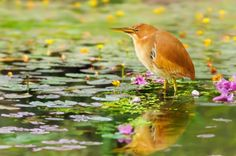 Bird - green, water, lake, flower, orange, bird, pink