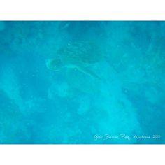 Great Barrier Reef世界自然遺産 ウミガメがいたよー #Australia #Cairns #2010 #GreatBarrierReef #自然遺産 by worldtrip375 http://ift.tt/1UokkV2