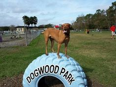 Top 10 Best Dog Parks in the World