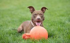 Other Topics Embrace Pet Insurance, Best Pet Insurance, Pet News, Pitbulls, Pets, Animals, Animales, Pit Bulls, Animaux