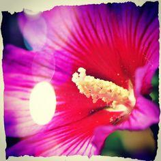 täglich frische Bilder ... http://instagram.com/iceworx