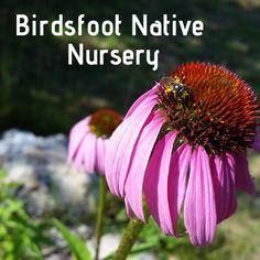 Birdsfoot Native Nursery is a wholesale native plant nursery located in South Boardman, MI.