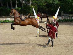 Queluz equestrian school