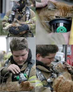 Funny pictures about Firefighter saving a cat. Oh, and cool pics about Firefighter saving a cat. Also, Firefighter saving a cat. Cute Kittens, Cats And Kittens, Crazy Cat Lady, Crazy Cats, Amor Animal, Faith In Humanity Restored, Cat Life, I Love Cats, Animal Rescue