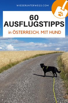 Ausflugstipps mit Hund in Österreich - alle selbst getestet Dog Playground, Europe Travel Guide, Dog Travel, Camping, Dog Training, Traveling By Yourself, Around The Worlds, Dogs, Nature