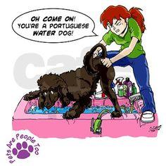 Groomer Humor - Reluctant Bat Women& T-Shirt Doberman Dogs, Doberman Pinscher, Dachshund Dog, Dog Cat, Dobermans, Dog Grooming Shop, Dog Grooming Business, Grooming Salon, Bat Shirt