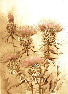 Osty - watercolour painted with coffee - Maria Roszkowska