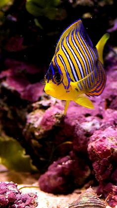 Saltwater Aquarium - Find incredible deals on Saltwater Aquarium and Saltwater Aquarium accessories. Let us show you how to save money on Saltwater Aquarium NOW! Underwater Creatures, Underwater Life, Ocean Creatures, Saltwater Aquarium, Aquarium Fish, Freshwater Aquarium, Fauna Marina, Life Under The Sea, Beneath The Sea