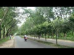 shahjalal university - Google Search