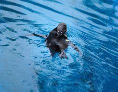 KIRYUGAOKA Zoo  kiryu gunma