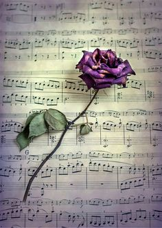 Raindrops and Roses.....<3**