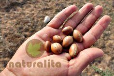Argan meyveleri zeytinden daha büyüktür, sarı eriğe benzer, içindeki pulpu tat olarak acıdır, en fazla 3 çekirdeği var ve dış kabuğu oldukça dayanıklıdır (fındığın kabuğundan 16 kat daha sert). Bu meyveler sahranın sert koşullarında yılda sadece iki kez yetişir. Argana bitkisi 150-200 yıl yaşar, ama 400 yıllık örneklere rastlamak da mümkündür. Argan tohumlarından elde edilen yağ (Arganpur Argan yağı), dünyadaki en pahalı bitkisel ürünlerden sayılıyor.
