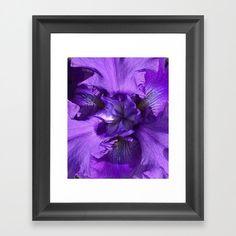 Inside Bearded Iris...http://ow.ly/9fVD30bfeR1 #beardediris #flower #botanical #plant #garden #petals #bloom #blossom #seed #Spring