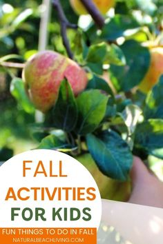 50+ Fall Activities for Preschoolers - Fun Fall Activities - Natural Beach Living Fall Preschool Activities, Nature Activities, Hands On Activities, Pumpkin Life Cycle, Fall Arts And Crafts, Cool Science Experiments, Spiders, Pumpkins, Apples