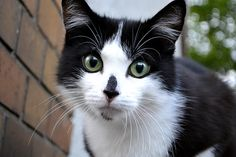Aggressive cat http://ift.tt/1RXlHLH