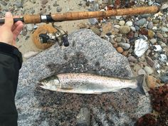 Seatrout from Als