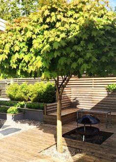 Baum vor dem Sichtschutz