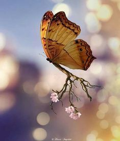 Image may contain: flower, plant, outdoor and nature Scared Of Spiders, Animals And Pets, Cute Animals, Most Beautiful Butterfly, Types Of Bugs, Miniature Photography, Butterfly Images, All Nature, Blurred Background