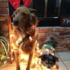 Charlie And Cooper! Veterinary Services, Costume Contest, Christmas Animals, Christmas Costumes, Animal Pictures, Photo Galleries, Chiropractic, Pets, Gallery