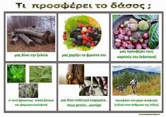 Ζήση Ανθή : Εποπτικό υλικό για το δάσος.    Πίνακες αναφοράς : Τι προσφέρει το δάσος ; Forest Theme, Earth Day, Woodland Animals, Trees To Plant, Kindergarten, Activities, Education, Plants, Kids