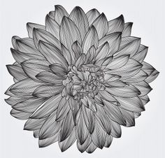 ink drawing of black dahlia flower, element for your design, engraving style Stock Photo