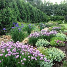 Plant combination: allium, geranium, sedum, iris (dry creek bed)