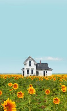 Old Farm House & Sun Flowers