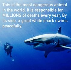 The truth hurts that's why you see a lot of people tend to shy away from it. Don't let the truth break you,you can still become Vegan and do right ❤️ Shark Quotes, Environment Quotes, Scuba Diving Quotes, Save Our Earth, Shark Swimming, Dangerous Animals, Marine Biology, Great White Shark, Shark Week