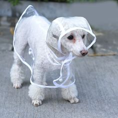 LZDBF Waterproof Puppy Raincoat Transparent Pet Rainwear Clothes for Small Dogs/Cats (M, WHITE) >>> See this awesome image  : Dog coats