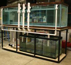 Aquarium Pump, Reef Aquarium, Amazing Aquariums, Tropical Fish Aquarium, Reef Tanks, Aquarium Ideas, Discus, Fish Tank, Turtles