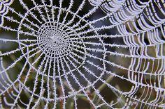Dame araignée fait de la dentelle... / Toile couverte de givre. / Frozen web.