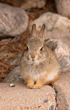 Beautiful wild rabbit