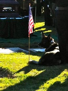 K9 Yaro laying by the grave of his fallen partner Officer Kevin Tonn.  Officer Down Memorial Page --- http://www.odmp.org/officer/21629-police-officer-kevin-a-tonn