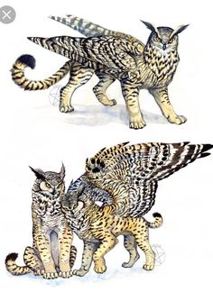 Other pinner says: Owl-Griffins. Now, how to create your own unique creatures for your story. Just by combining fantasy and real creatures to find your own? Mythical Creatures Art, Mythological Creatures, Magical Creatures, Fantasy Kunst, Fantasy Art, Pet Anime, Fantasy Beasts, Dragons, Creature Concept