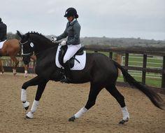 Dressage, Horses, Blackberry, Equestrian, Bespoke, Animals, Instagram, Amazing, Style