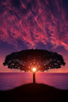 Awesome Sunset by Bess Hamiti Tree live