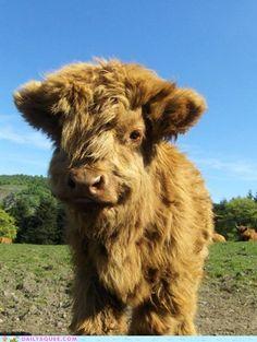 the cutest calf I   E V E R  saw=D